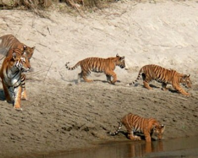 Bardia National Park 3 nights / 4 days