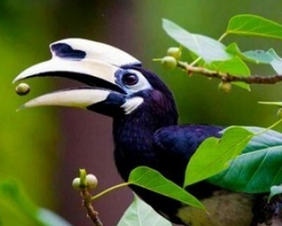 Tropical Birding Tour